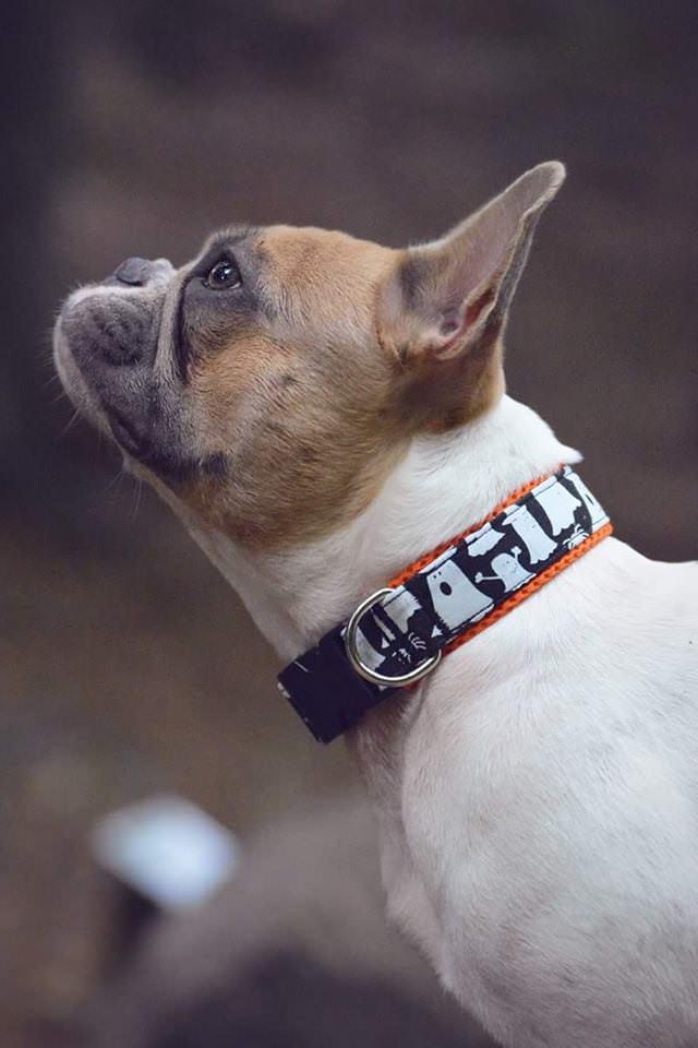 Hundehalsbänder selbermachen - eine Übersicht über Materialien mit ...