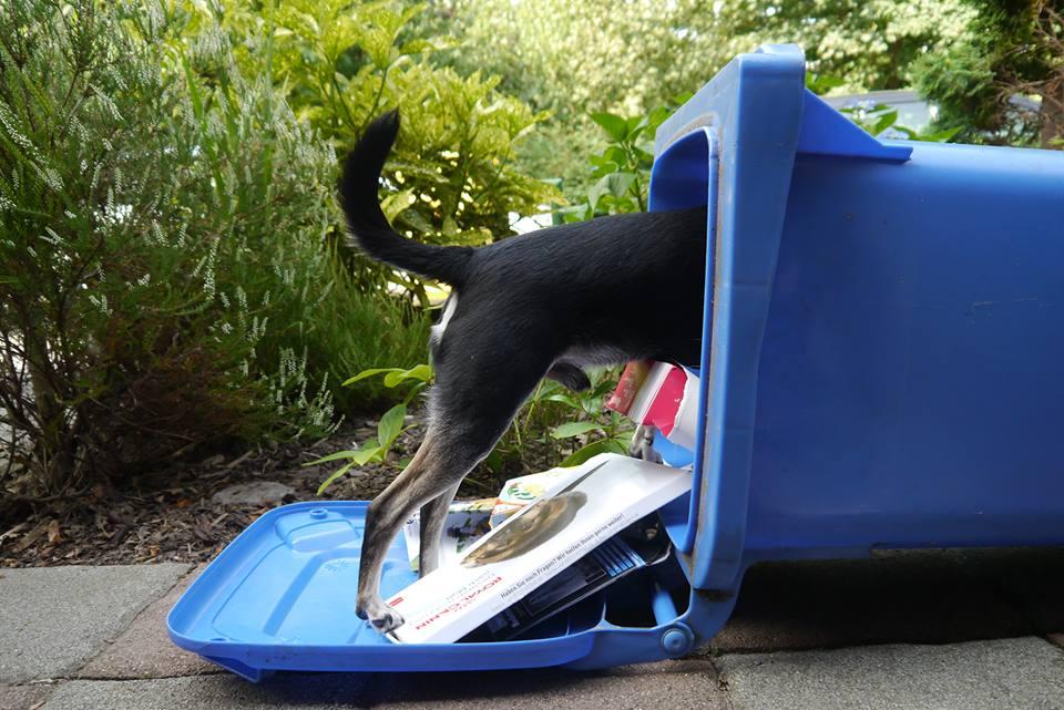 Hunde Intelligenzspiele Aus Müll Basteln