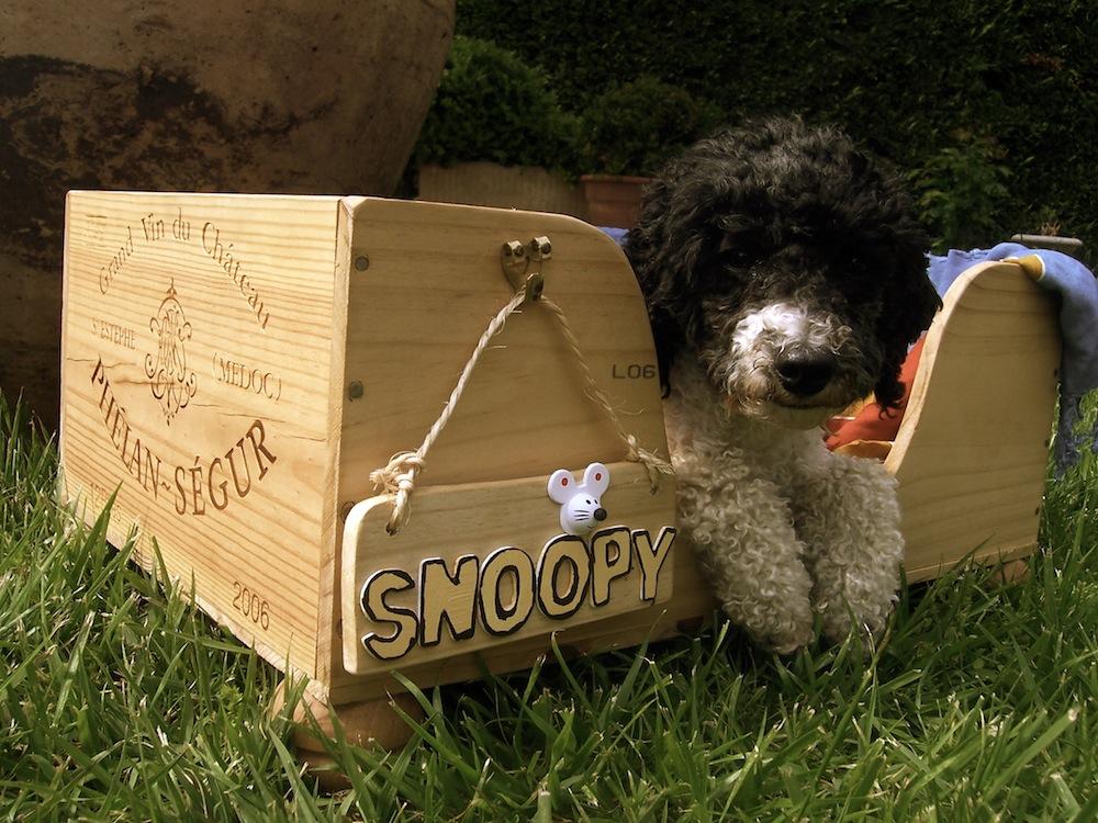 Hundebett aus weinkiste selber machen f r kleine hunde - Namensschild selber machen ...