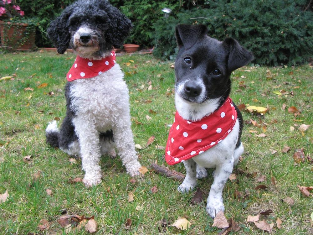 Halstuch nähen für Hunde, von corinna