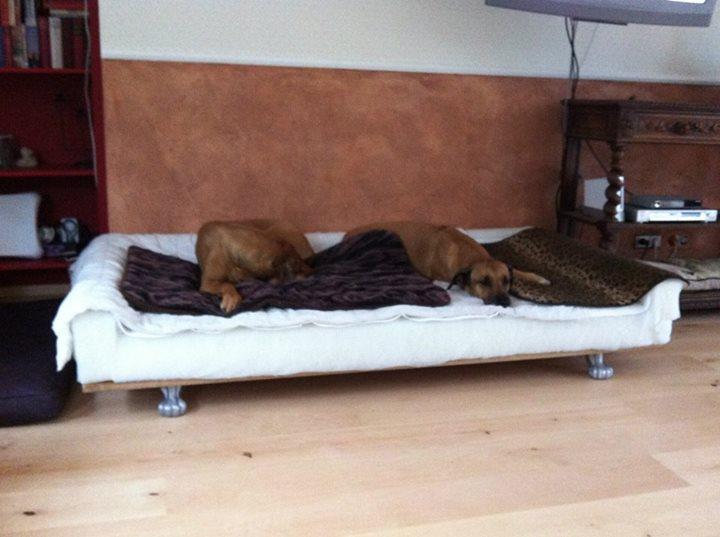 Orthop 228 Disches Hundesofa Von Ainra
