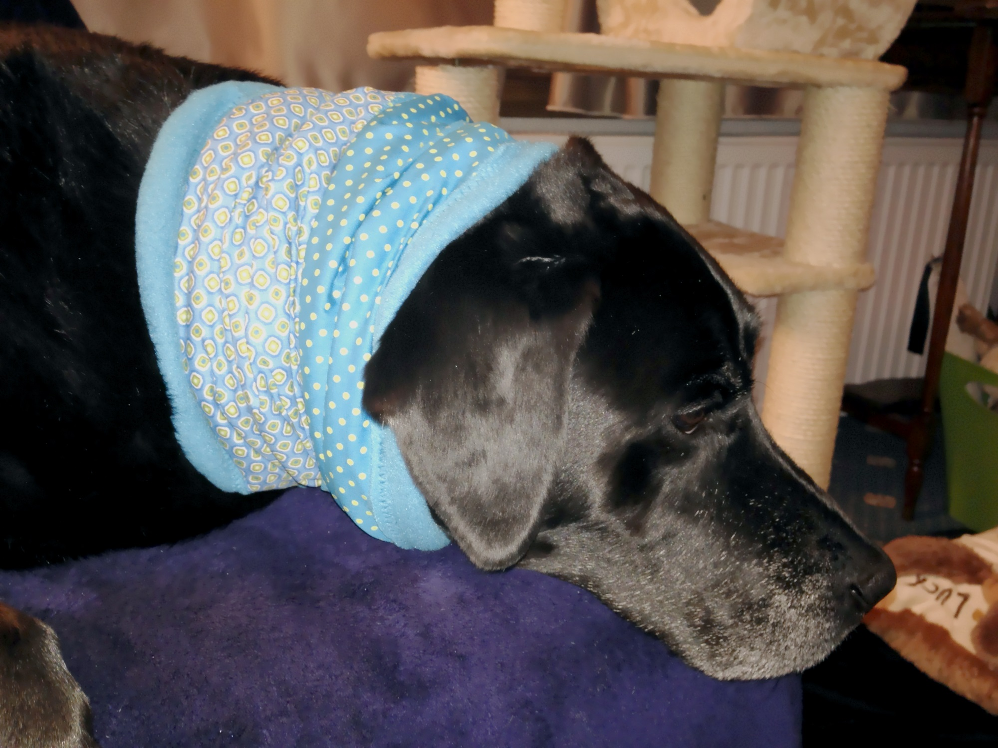 Loop-Schal für Hunde, von Columbo