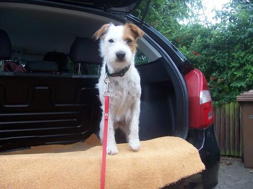 Ein toller Krallenschutz! Außerdem ist es leichter für die Hunde ein ...