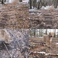 versteck hundesport gebraucht