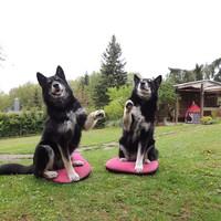 halskrause hund selber machen