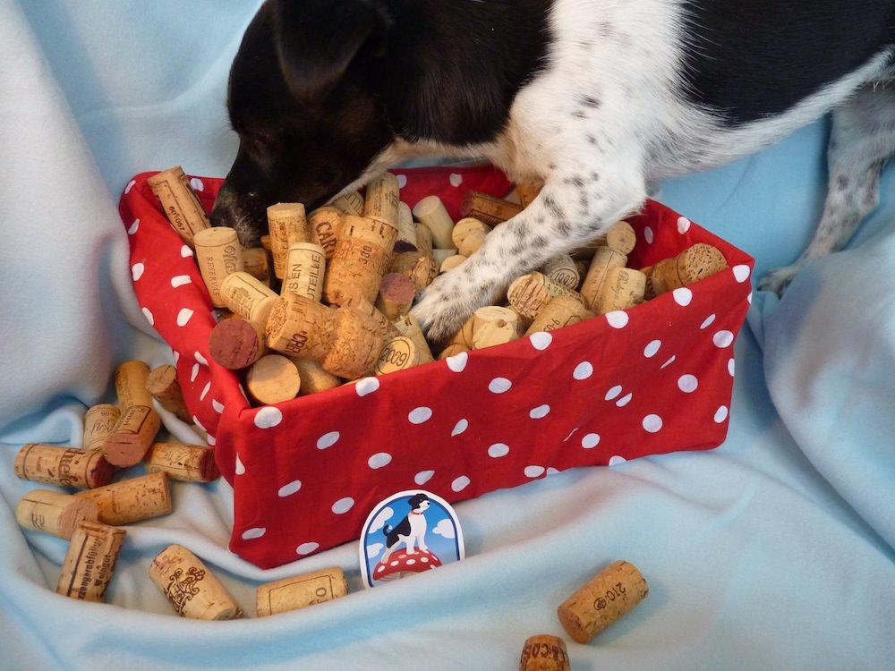 Flaschenseilspiel, Spiel für Hunde aus einer Flasche leicht
